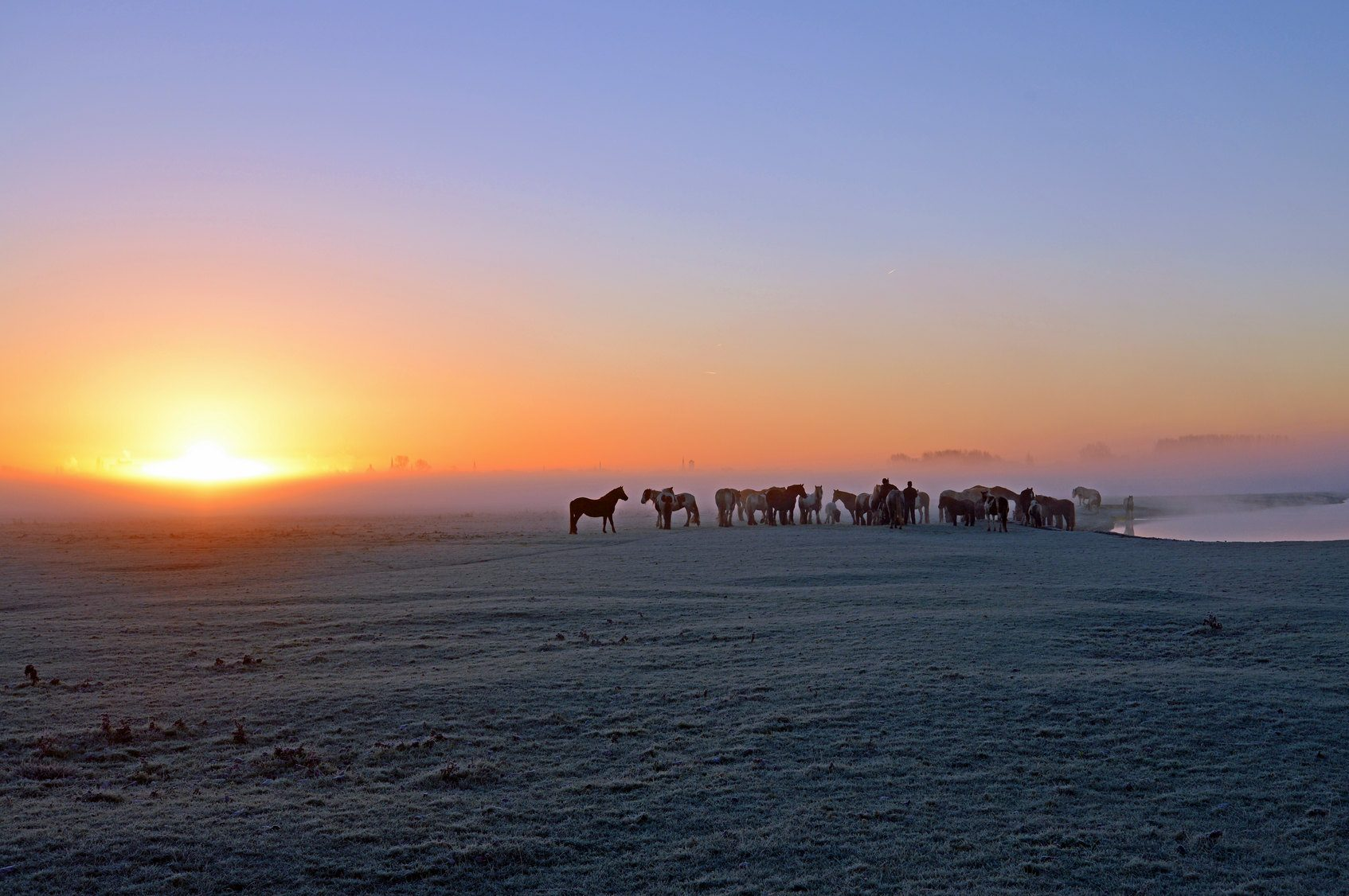 Sunrise over a wintry plain featuring a pack of horses
